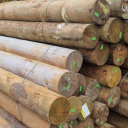 Point-Lumber_DSCF0422 1